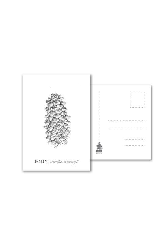 Folly Arborétum képeslap Pinus Coulteri toboz rajzzal